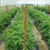 Agricultural Herbicides Testing Services