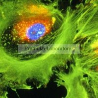 Bio Analytical Laboratories Services