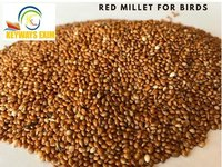 Red Millet (Panicum Miliaceum) for Bird Feed