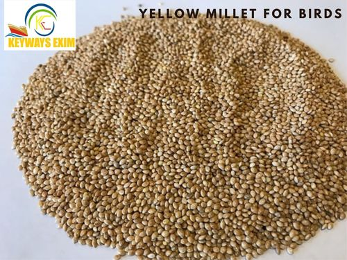 Yellow Millet (Panicum Miliaceum) for Bird Feed