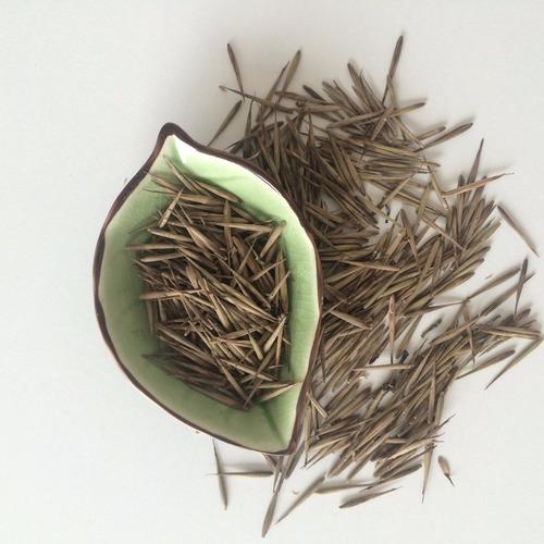 Gang Zhu 200g Per Bag Free Samples Wholesale Golden Bamboo Seeds