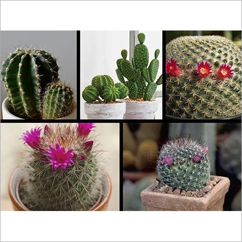 Succulant And Cactus Plant