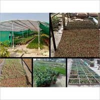 Plant Production Projects