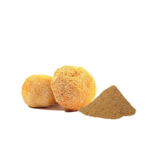 Lions Mane Mushroom Extract Powder 50% Polysaccharide