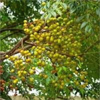 Nimboli Fruit