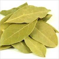 Tejpatta Leaf