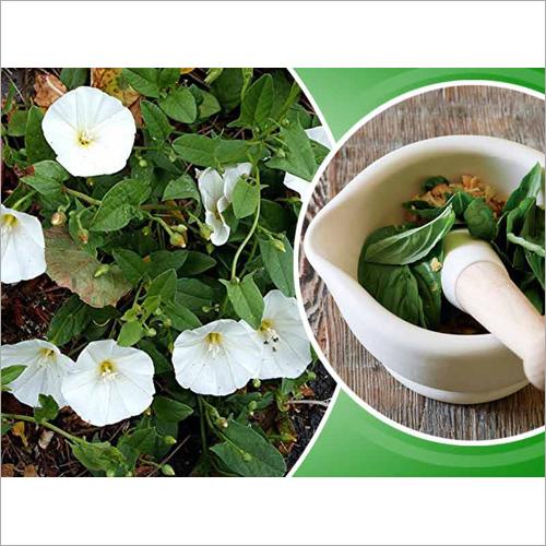 Shankhpushpi Herb