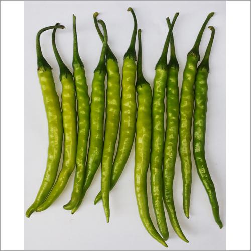 F1 Hybrid Gauri Chilli Seeds