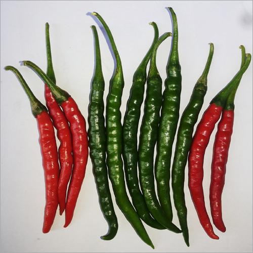 F1 Hybrid Shri 70 Chilli Seeds