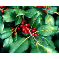 Cocculus Indicus Extract