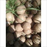 Fresh Sapota Fruit