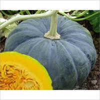 Pumpkin Balwant