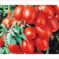 Hira Tomato