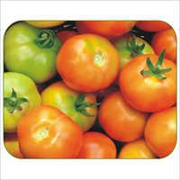 Vaishnavi SH-445 Tomato