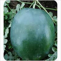 Watermelon Krish
