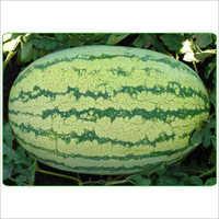 Watermelon Super Tiger