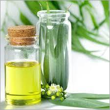 Eucaliptus Oil