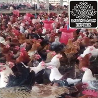 Sonali Chicken