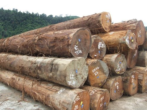 Mahogany, Tali, Doussie Round Logs For Sale