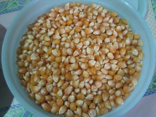 Yellow Maize, Dried Yellow Corn, Popcorn