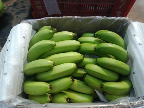Premium Quality Cavendish Banana