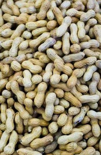 Organic Shelled Groundnut