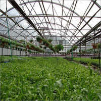 Agriculture Greenhouse Consultancy Solution