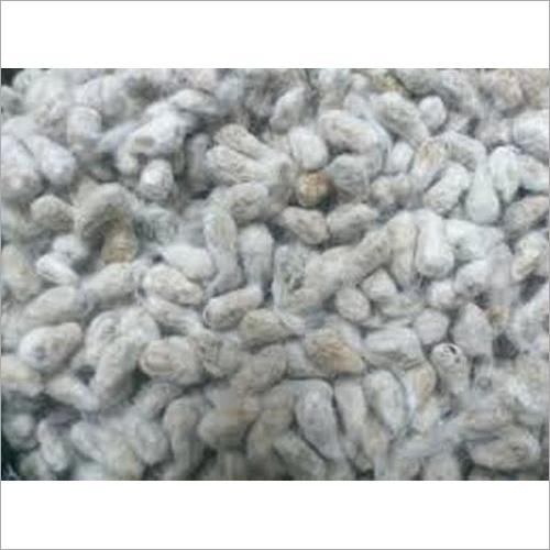 White Cotton Seed