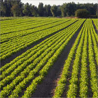 Agriculture Laboratory Testing Services