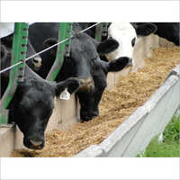 Maize Cattle Feed Testing Services