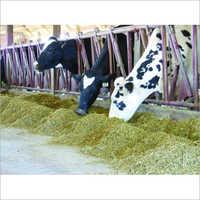 Animal Feed Testing Analysis Laboratory Services