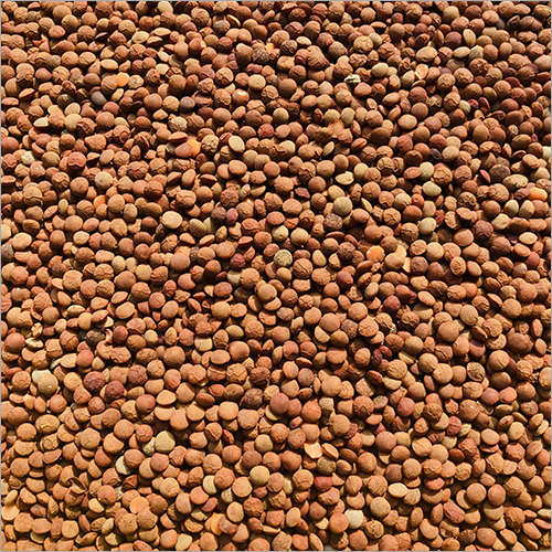 Lentil (Whole Masoor)