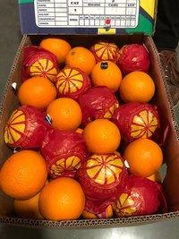 Egypt Oranges
