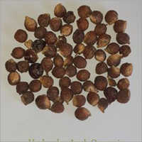 Organic Soap Nuts (Areetha)