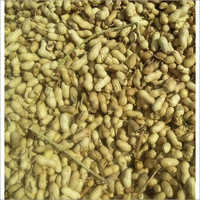 Raw Groundnut In Shells