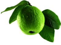 Guava Fresh