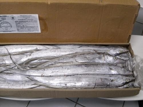 Fresh Frozen Ribbon Fish