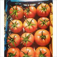 Fresh Tomatoes