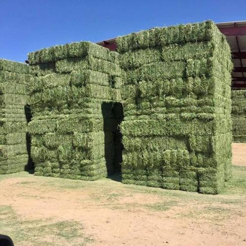 Grade A Alfalfa Hay for Sale