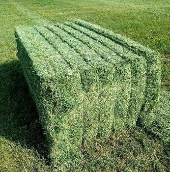 Alfalfa Hay/Timothy Hay
