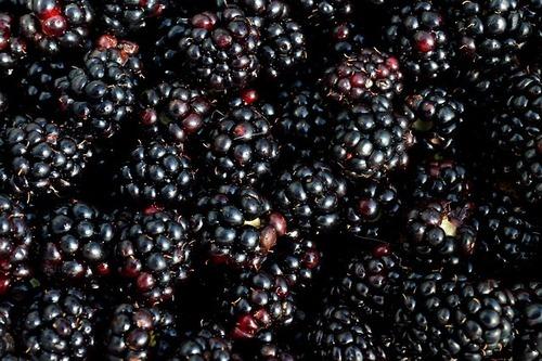 Blackberry Liquid Extract