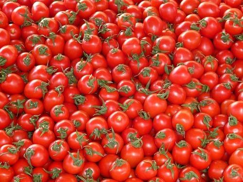 Tomato Liquid Extract