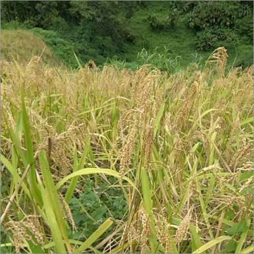 Fresh Rice