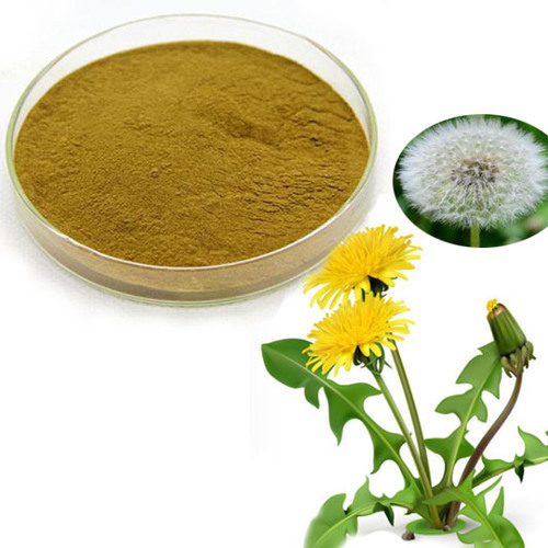 Dandelion Root Extract (Chinese Extract)(