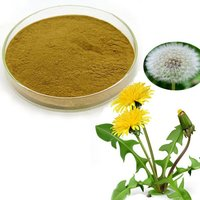 Dandelion Root Extract (Chinese Extract)
