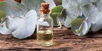 Eucalyptus Extract (Nilgiri Extract )