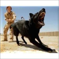 Dog Escort With Dog Handler