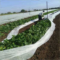 Agricultural Non Woven Fabric Cover