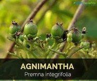 Agnimantha Herbs