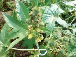 Arandi Herbs